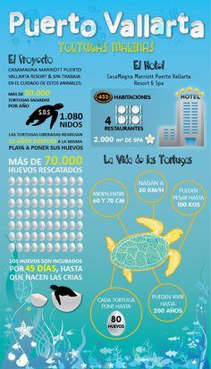 Conoce más de Puerto Vallarta...#viajadiferente #todotrips #travelsocial