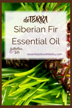 DoTERRA Siberian Fir Essential Oil doTERRA Siberian Fir essential oil is coming to doTERRA! At the 2107 doTERRA convention, Dr. Hill announced that we will now carry doTERRA Siberian Fir Oil. Siberian Fir is an exciting addition to our essential oil a Healthy Habits, Healthy Life, Young Living Oils, Essential Oil Uses, All Family, Doterra Essential Oils, Natural Cleaning Products, Natural Health, Aromatherapy