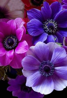 The Color Purple ƸӜƷ Amazing Flowers Beautiful Images Pretty Anemones