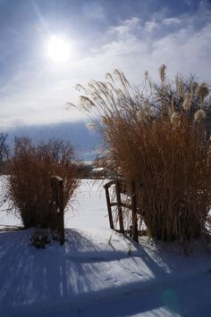 Winter Landscape, Gardening, Landscape, Landscape Design by Alpine Gardens