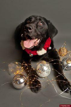 Holiday Dog Photos on Behance