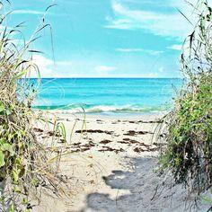 Views around Kite Beach in Jupiter, FL