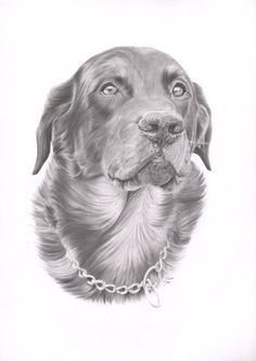 A portrait of our beloved Beauceron, picture taken by my dear friend Sara Arldén. Size: A3  Mechanical pencil 0.7mm HB, B, 2B, 0.5mm 3H, B, 2B, 0.3mm 3H + Derwent pencil 5B on Daler Rowne...