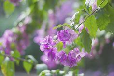 heelsandpeplum photo flowers rain beautiful moment http://heelsandpeplum.wordpress.com/
