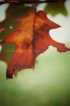 A Little Bit Crunchy A Little Bit Rock and Roll: (Not Quite) Wordless Wednesday: Backyard Fall #nature #photography #fall