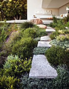 A Garden with Fynbos Plants designed by Carolyn Mullet