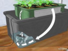 Grow Hydroponic Tomatoes Step 1 Version 2.jpg