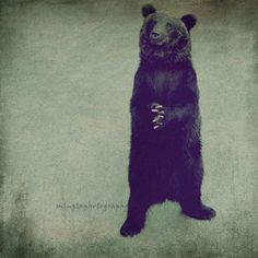 Please Please -  forgive me Apologize brown black bear sorry dear please please cute black Fine Ar Print 8x8 on Etsy, $30.00