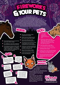 FIREWORKS SAFETY TIPS FOR PETS  {Infographic} In the spirit of our Critter Club here are some tips for those other members of you family on this Fourth of July holiday.