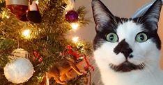 8 Signs Your Cat Believes in Santa http://ibeebz.com