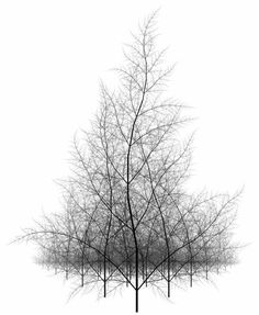 when it is stripped of all things that belong, in perfect solitude, it is the right time. do it. winter forest by Stephen