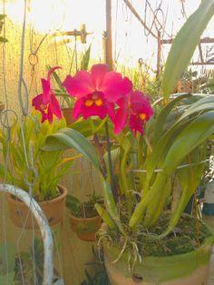 cultivando Orquídeas e idéias: SUA PLANTA ESTA DOENTE?  CUIDE DA PLANTA E NÃO DA ...