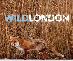 There so much Wildlife in London!