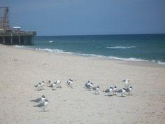 I took this a couple of weeks before Hurricane Sandy hit. Seaside, NJ (L. Packer)