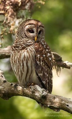 On a perch #owl #photography