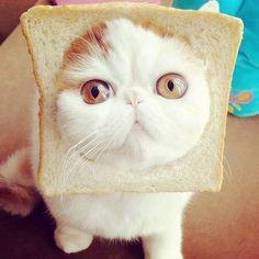 am i cute?   Kitty