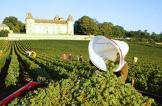 Burgundy - Macon #burgundy