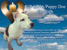 R.I.P KIYA / PUPPY DOE