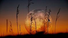 Big Moon Rising  ❤ gorgeous ❤