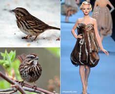 You Too Can Sing Like a Songbird with a Songbird Dress!