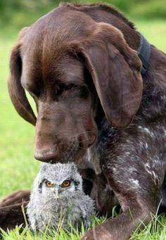 Oh no way...  Cody would like the owl toooooo much!!!