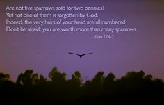 Day 221 (August 9) Inspirational illustration of Luke 12:6-7 -- Are not five sparrows sold for two pennies? Yet not one of them is forgotten by God. Indeed, the very hairs of your head are all numbered. Don't be afraid; you are worth more than many sparrows.