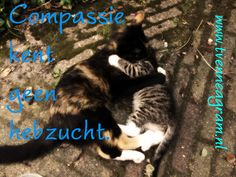 compassie hebzucht enneagramtype 5