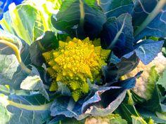 Romanescu broccoli, aka Roman cauliflower or broccoli ~ #food #nutrition #farmersmarket #healthyeating #vegetables
