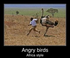 I don't play Angry Birds but this sure makes me laugh.  I love Africa!