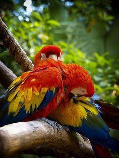 marvellous parrots