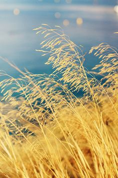I like the color created by nature. Goldish yellow :D Mellow Yellow, Blue Yellow, Fields Of Gold, The Great Outdoors, Color Inspiration, Mother Nature, Beautiful Places, Scenery, In This Moment