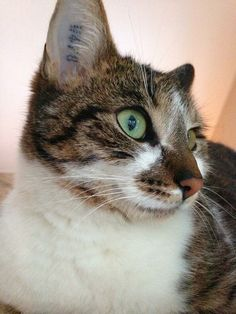 Nala  Katze | Pawshake