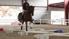 Cavaletti Training for Horses with Erika Jansson, Dressage Trainer