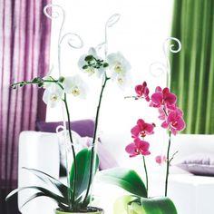 Orchideenstab transparent klar