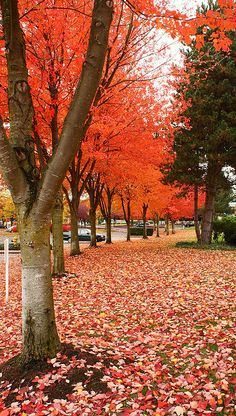 Colors of Fall in Redmond - Do you know that strong colors bring strong emotion? Hope you feel more energetic with this beautiful scene!