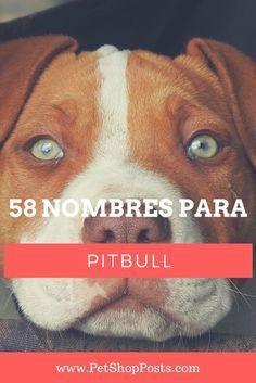 Pitbulls, Marvel, Pitbull Terrier, I Love Dogs, Animals And Pets, Pugs, Names, Fauna, Draco