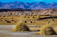 Antofagasta de la Sierra - Catamarca - Argentina | Antofagas… | Flickr