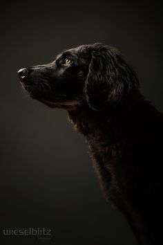 Black dog.  from Elke Vogelsang, at http://wieselblitz.com/3652013-2/