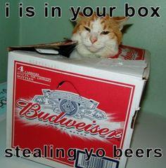 beer magnet cat gif