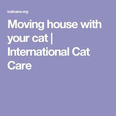 Moving house with your cat | International Cat Care