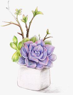 Aquarell Sukkulenten, Pflanzen, Topf, Wasser - Marleen Hafer - - New Ideas Succulents Drawing, Watercolor Succulents, Watercolor Flowers, Art Sketches, Art Drawings, Plant Drawing, Color Pencil Art, Colored Pencil Artwork, Cactus Art