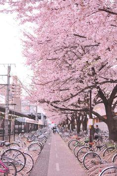 Sakura street by train station