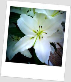 """""""Quem tentar possuir uma flor, verá sua beleza murchando. Mas quem apenas olhar uma flor num campo, permanecerá para sempre com ela. Você nunca será meu e por isso terei você para sempre."""" Paulo Coelho"""