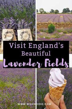 Travel Bucket List:Visit England's beautiful lavender fields – WhodoIdo: Wander through the beautiful lavender fields and take in the fragrant lavender. Explore the lavender fields when in full bloom. Don't forget to try lavender ice cream! Europe Travel Tips, European Travel, Travel Advice, Travel Ideas, Traveling Tips, Travel Quotes, Travelling, Sightseeing London, London Travel