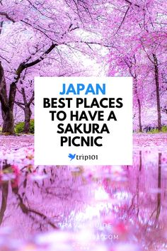 Hanami, flower watching in English, is an activity where people gather to enjoy the Sakura (Cherry Blossoms) in spring. Here are 5 recommended spots in Tokyo perfect for a fantastic Hana-mi picnic! Sakura Cherry Blossom, Cherry Blossom Flowers, Tokyo Japan Travel, Light Pink Flowers, Tokyo Hotels, Pony Rides, Unique Photo, Hana, Picnic
