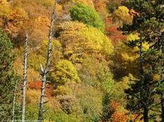 Los bosques caducifolios de las regiones templadas están prácticamente limitados a zonas de latitudes medias del hemisferio norte.