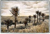 African Landscape : Aloe Heights