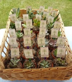 Lord of the Rings succulent wedding shower favors