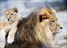 Animal Dads | Top 10 Animal Dads Image Credit: Kristian Sekulic/iStockphoto