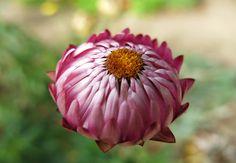 pink flower, image by Marjolein Dallinga #marjoleindallinga #pink #bloomfelt #flower